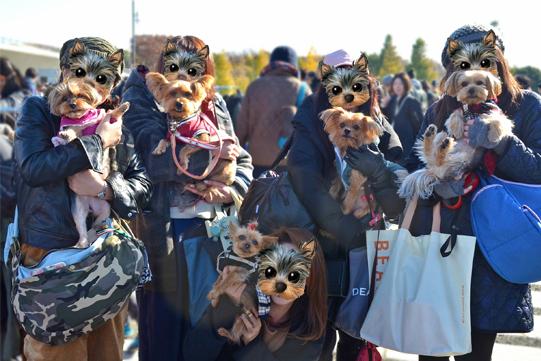 駒沢フリマ20181125美沙さんとクンカブルのお友だちとcloverさん forblog