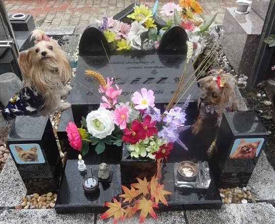 2018年12月23日リル14周忌のお墓参りSA