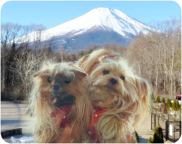 20190103_163357部屋からの景色 (21)リーパコと富士山from部屋のバルコニー