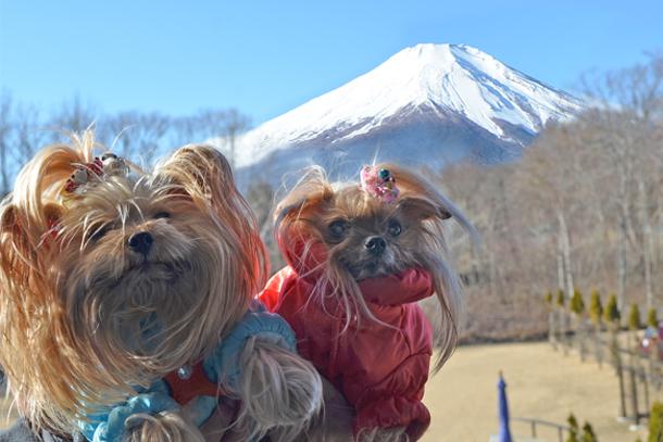 20190104_112100 DSC_2052今朝の富士山も素晴らしいS