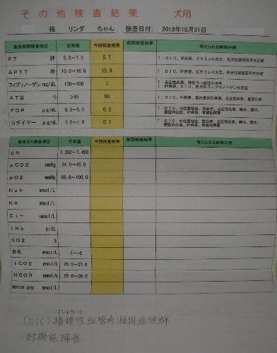 20181031動物病院明細③-1