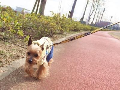 IMG_8096 お散歩風景②