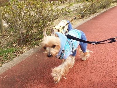 IMG_8097 お散歩風景③