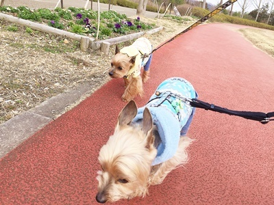 IMG_8104 お散歩風景⑤