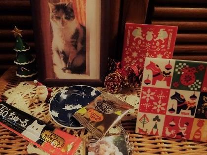 ミケ子ちゃん、メリークリスマス!
