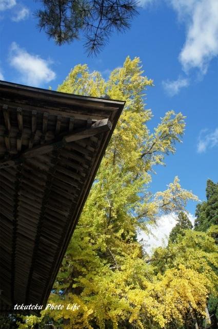 銀杏と青空