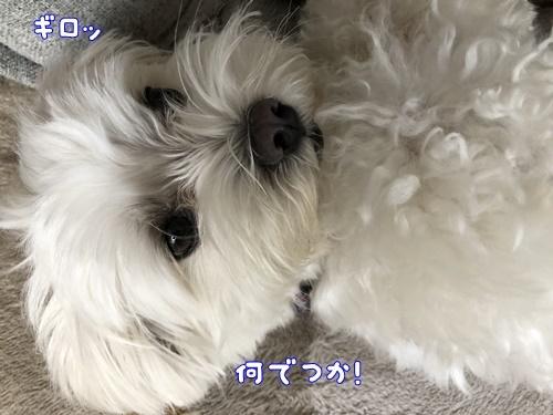 まるくん応援8