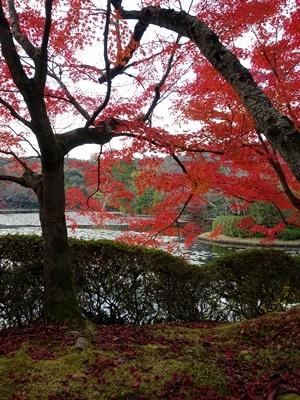 龍安寺池の紅葉1811