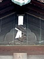 京都御所鬼門の塀の猿1812
