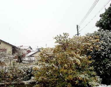 出雲は雪!