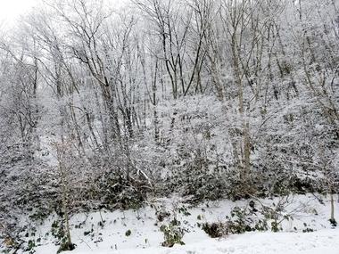 頓原は雪景色!