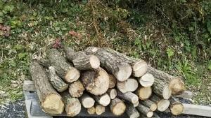 10328植菌した榾木運ぶ