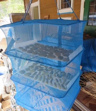 新春、干し芋作り・5