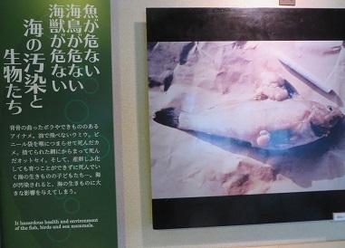 海の博物館・14