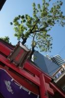 BL181111熊野街道マラ1-2IMG_8458