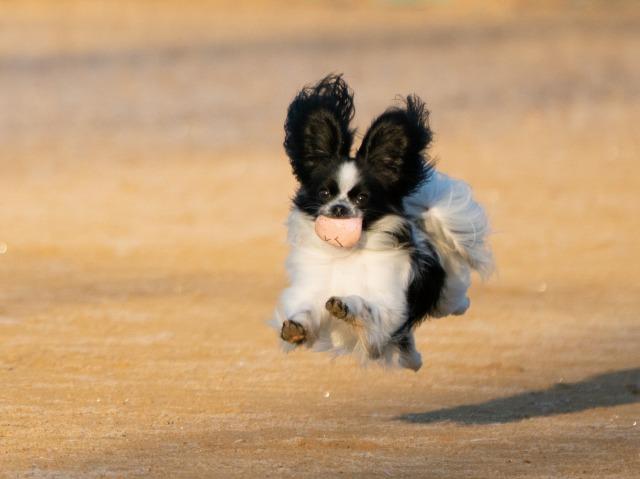 飛行犬-06