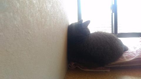 猫なんだよそっちゃんだよ