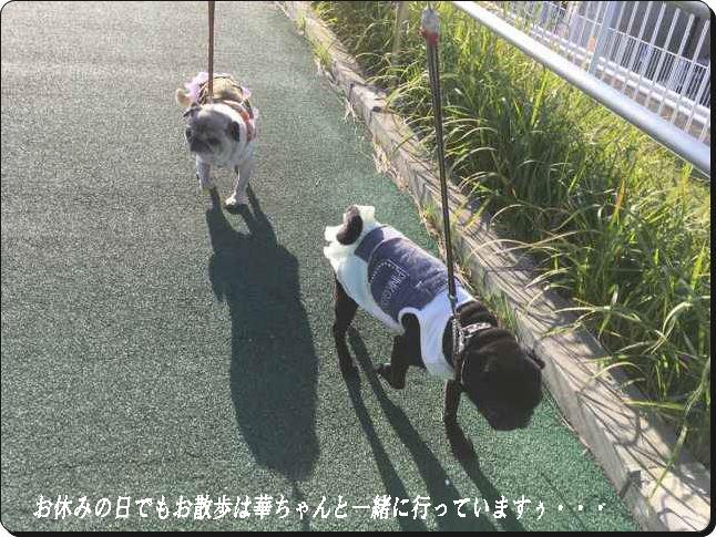 お散歩へ行ってる