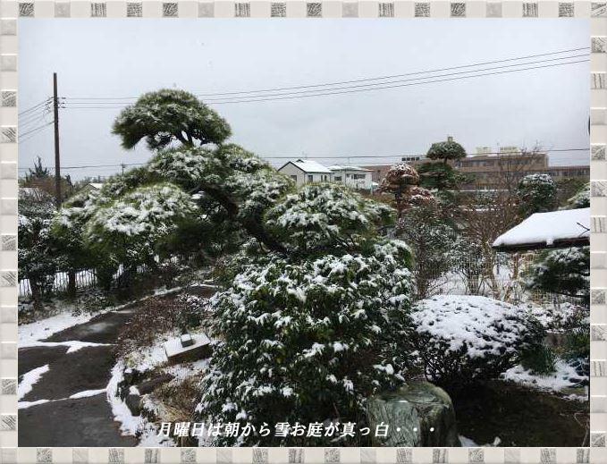お庭真っ白