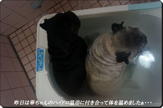 ハイドロ温浴