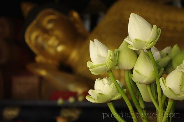 タイ寺院の蓮の花