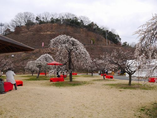 19,2,21 神崎緑地公園 (7)