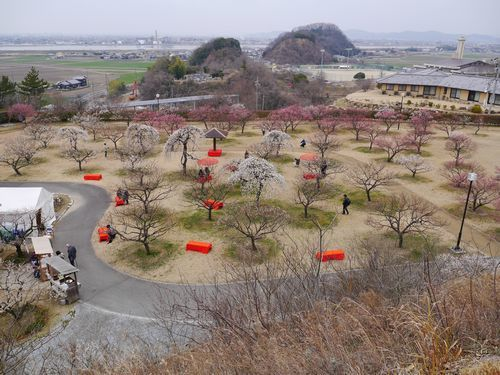 19,2,21 神崎緑地公園 (14)