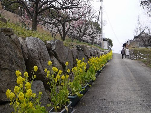 19,2,21 神崎緑地公園 (12)