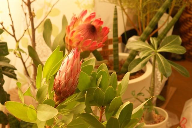 窓辺の花たち-3