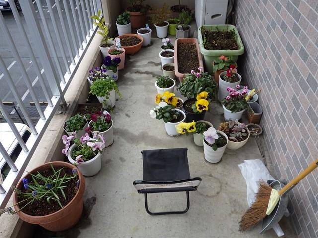 玄関先の草花