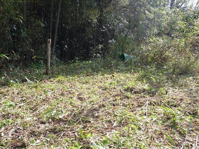 第二農園の竹刈り-3