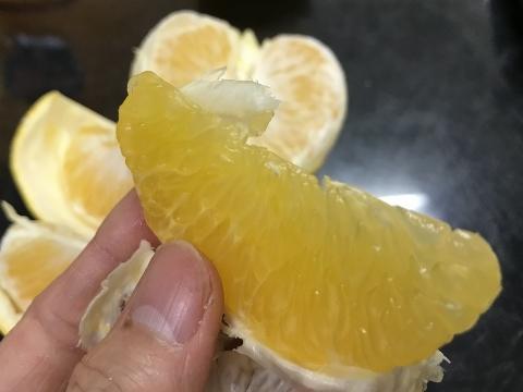 早生八朔。めっちゃ美味しそう!!