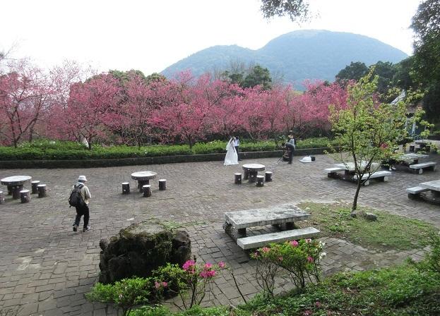 18 花が咲き誇るなかで結婚式の記念撮影