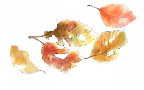 秋の落し物1