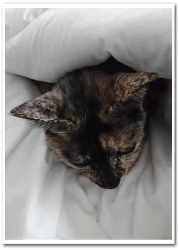 お姉ちゃんのベッド3