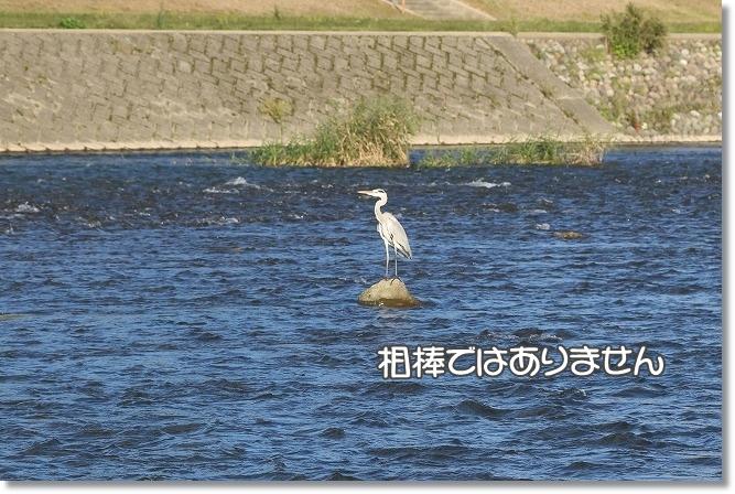 IMG_D0632b.jpg