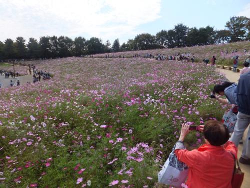 昭和天皇記念公園15