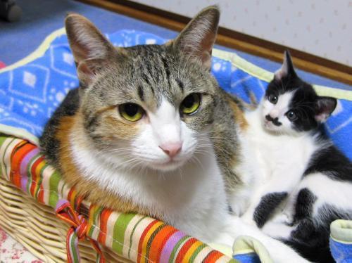 みくくぅ子猫ストーカー
