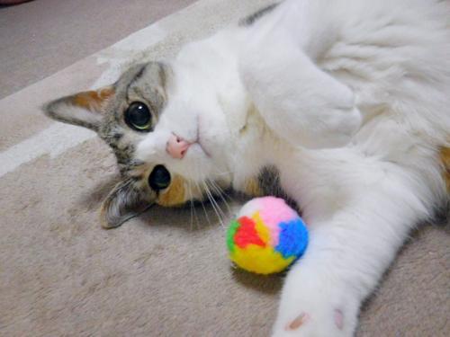 みくさんボール遊び