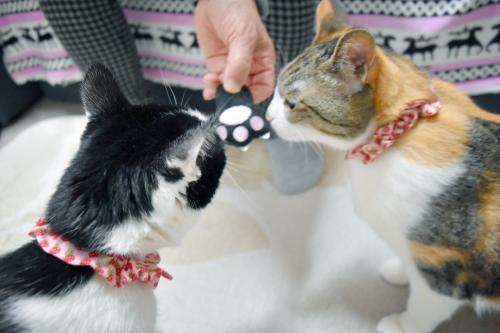 みくくぅ猫の手おもちゃ匂い