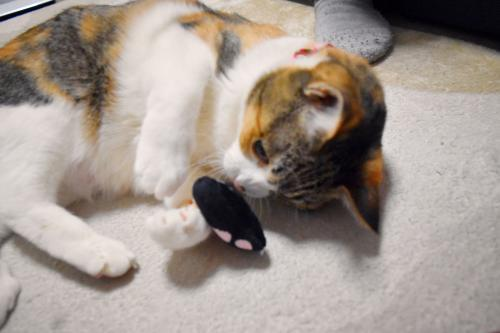 みく猫の手おもちゃ