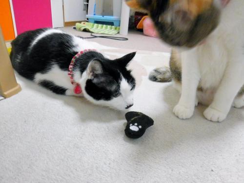 みくくぅ猫の手おもちゃ02