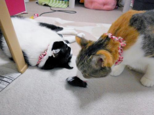 みくくぅ猫の手おもちゃ03