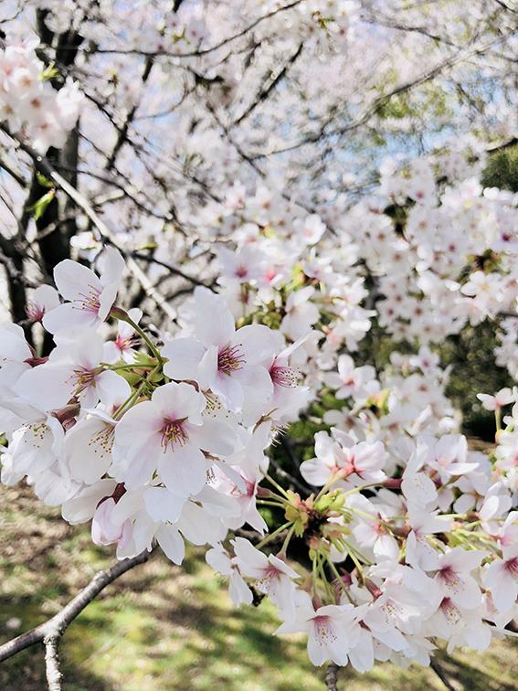kichijiro9.jpg