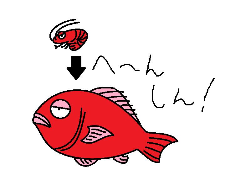 453つちのこ蝦で鯛を釣る3