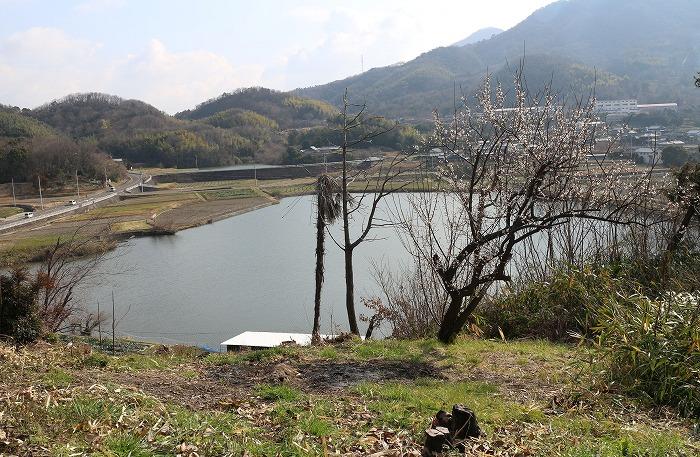 丸山池と白梅 31 2 17