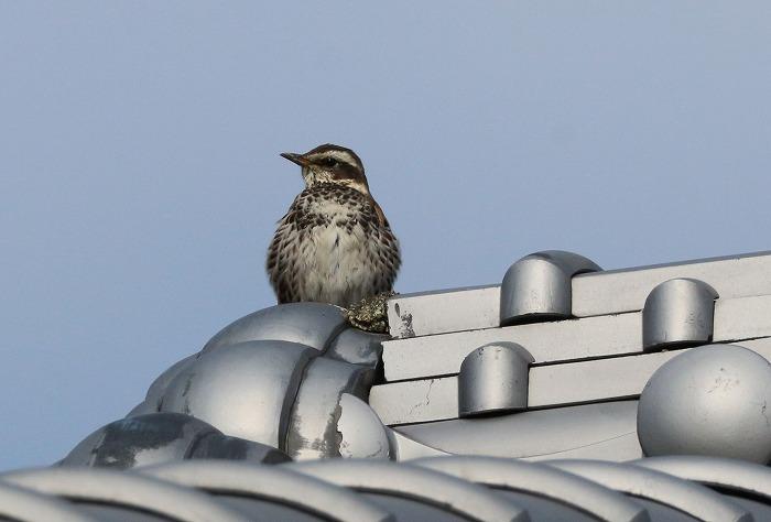 屋根の上の鳥 31 2 23