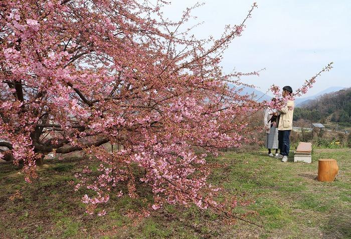 生まれて初めて見る桜やな 31 2 24