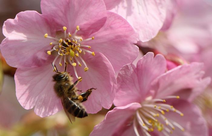ありゃりゃ~! 落ちよった蜜蜂 31 2 24