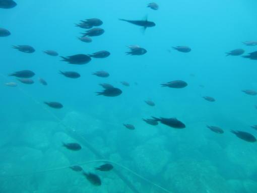 103  泳ぐ魚(1)